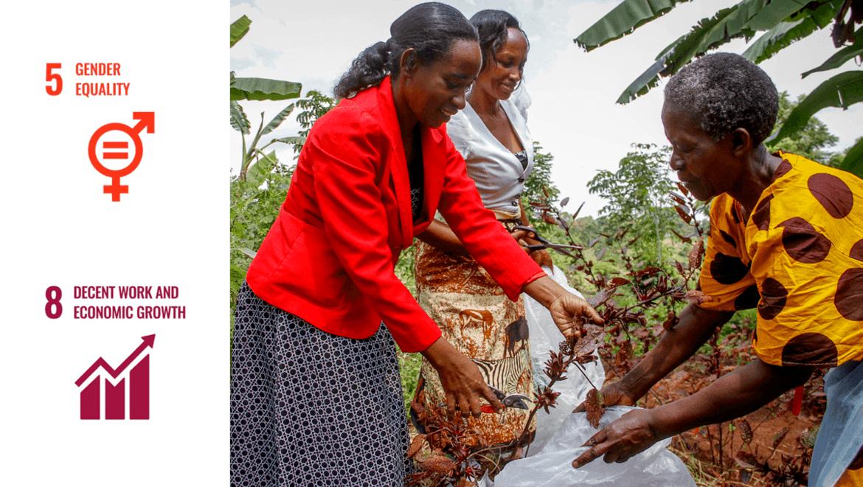 OECDs veileder for kjønnsperspektiv i jordbrukssektoren